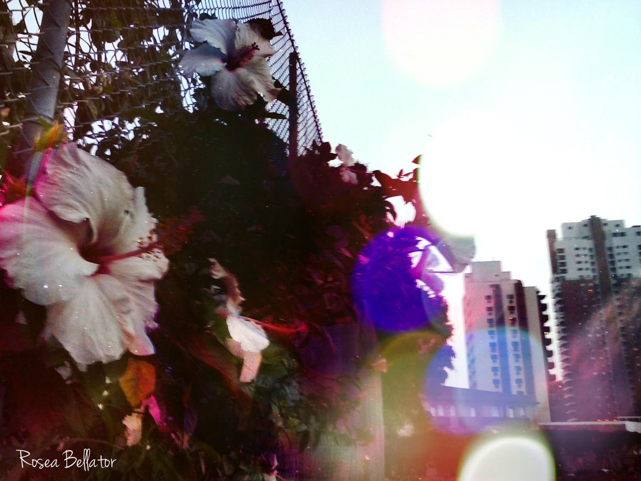Ritual de Ostara: É Hora de Florescer Ritual de Ostara: É Hora de Florescer
